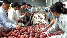 Hiện tượng Sơn La: Từ bán ngô, sắn… có thể xuất khẩu 1 tỷ USD