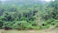 Hàng ngàn hộ dân Trường Thủy đi lên dưới tán cây rừng