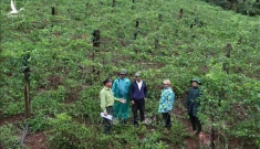 Tự nguyện trả lại hàng chục ha đất lâm nghiệp đã lấn chiếm
