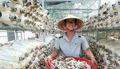 Chàng 9X Quảng Ngãi làm giàu với lĩnh vực nông nghiệp