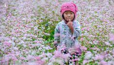 Ngỡ ngàng vẻ đẹp mùa đông về trên cao nguyên đá Hà Giang