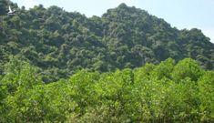 Tỉnh muốn xoá sổ 38 ha rừng, Bộ lập tức bác bỏ
