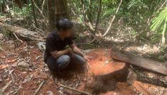 """La liệt cây đại thụ bị """"xẻ thịt"""" giữa rừng xanh, kiểm lâm không hề hay biết"""