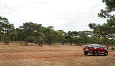 Thủ tướng yêu cầu nghiên cứu, đánh giá việc chuyển đổi 174 ha rừng cho FLC làm sân golf