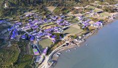 """Hòn đảo vô danh bỗng chốc thành thiên đường du lịch vì được """"nhuộm tím"""" ở Hàn Quốc"""