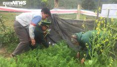 Nóng: Phát hiện một gia đình ở Hà Tĩnh trồng cây thuốc phiện trong vườn