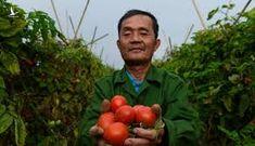 Nông dân Hà Nội: 'Chúng tôi cũng cần giải cứu'