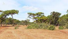 Sự thật về việc biến 174 ha rừng ở Gia Lai làm sân golf