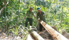 Khởi tố 5 cán bộ vụ lâm tặc mở đường giữa rừng đốn gỗ
