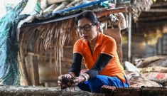 Thu gần 6 tỷ mỗi năm từ việc nuôi giun quế của nữ thiếu tá về hưu