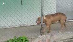 Thông tin mới bất ngờ vụ chó Pitbull cắn chết người ở Long An