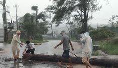 CSGT Đắk Nông dầm mưa cùng người dân dọn cây gỗ lớn đổ ngang đường