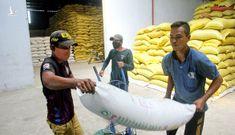 Gạo S24, ST25 Việt Nam lại bị cướp thương hiệu ở nước ngoài