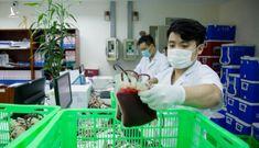 Hà Nội chuyển 1.000 đơn vị máu vào chi viện TP HCM