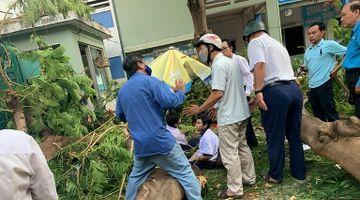 Nhân chứng kể phút giải cứu học sinh bị cây phượng đè ở TP.HCM